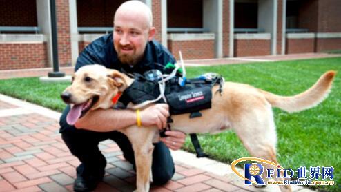 科学家成功研制人狗交流新型可穿戴设备