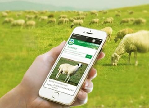 羊RFID电子耳标追溯系统