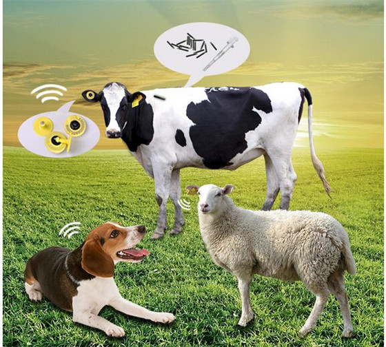 RFID农场畜牧业解决方案